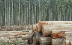 Admiten querella criminal contra juez de Constitución por vínculos con Forestal Arauco