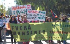 Lucía Sepúlveda: «Monsanto cultiva una relación muy estrecha con las autoridades en Chile»